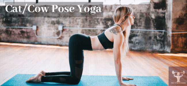 cat/cow pose yoga for back pain