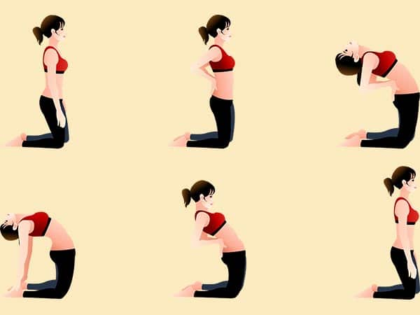 steps for Ustrasana asana for reducing belly fat
